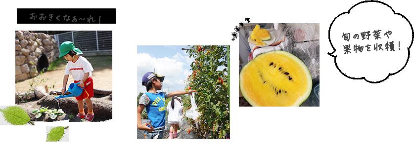 旬の野菜や果物を収穫!